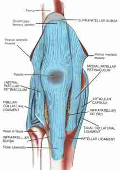 Chondromalacia and runners knee picture used from Principles of Anatomy and Physiology