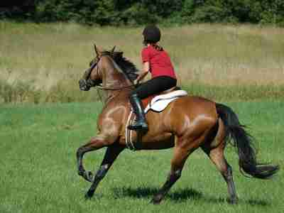 Horse Riding Stretching Exercises