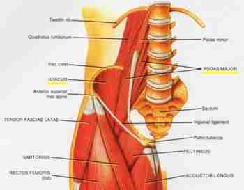 hip pain | iliopsoas muscle pain | iliopsoas injury, Human Body