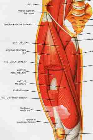 Iliotibial Band Muscle Group picture used from Principles of Anatomy and Physiology