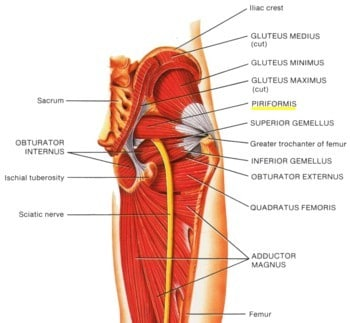 Sciatica pain treatment picture used from Principles of Anatomy and Physiology