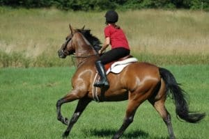Horse riding stretches