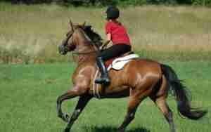 Stretches for Horse Riding