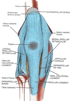 Patellar Tendinitis Ligament picture used from Principles of Anatomy and Physiology