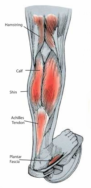 Calf and hamstring stretching with ProStretch