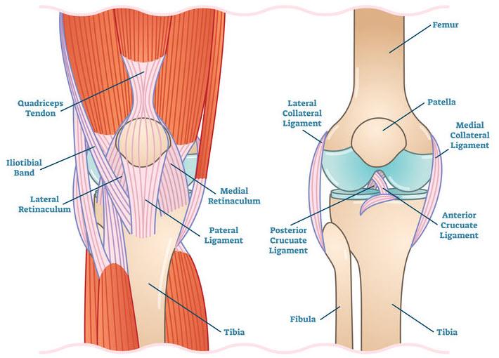 Runner's Knee Anatomy
